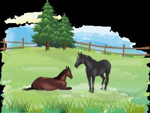 Retired horses